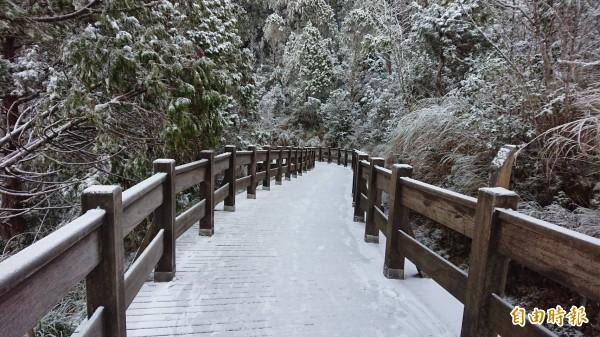 太平山今晨氣溫僅兩度,林間小徑出現霧淞美景。(太平山莊提供)