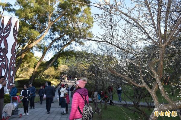 角板山公園遊客湧入賞花、踏青。(記者李容萍攝)