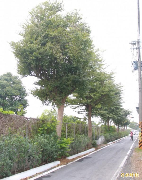 自行車路段部分道路有做擋土牆補強,但也導致道路更狹窄。(記者陳冠備攝)