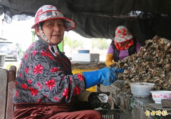彰化蚵農表示,氣候忽冷忽熱,天氣灰濛濛,造成海象不佳都是影響成長的因素。(記者陳冠備攝)