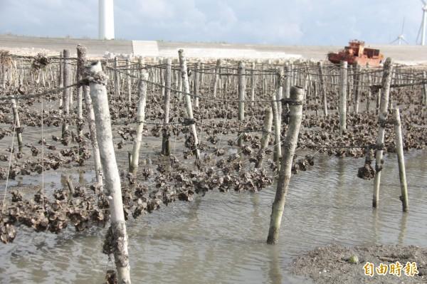 蚵農擔心,西部空氣長期灰濛濛,是造成蚵仔減產的原因。(記者陳冠備攝)