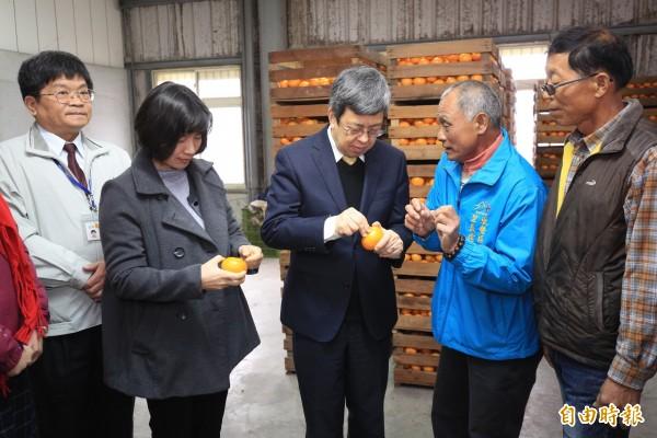 陳建仁副總統及台中市副市長林依瑩依農友指導從蒂頭處剝食茂谷柑。(記者歐素美攝)