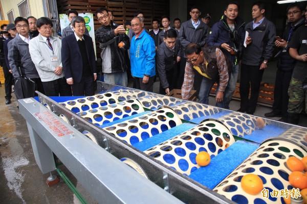 副總統陳建仁(左三)在青農盧治佑(左四)介紹下參觀茂谷如何選果分級。(記者歐素美攝)