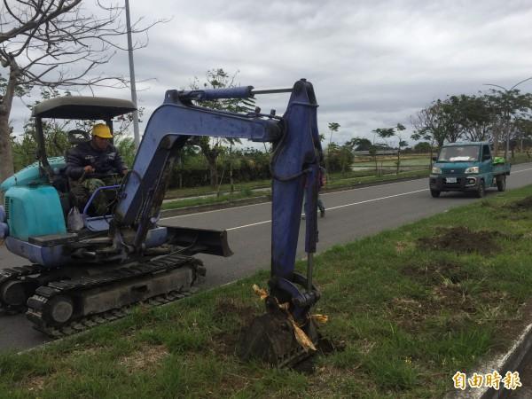 承包商在馬亨亨大道上整地,準備補植行道樹。(記者張存薇攝)