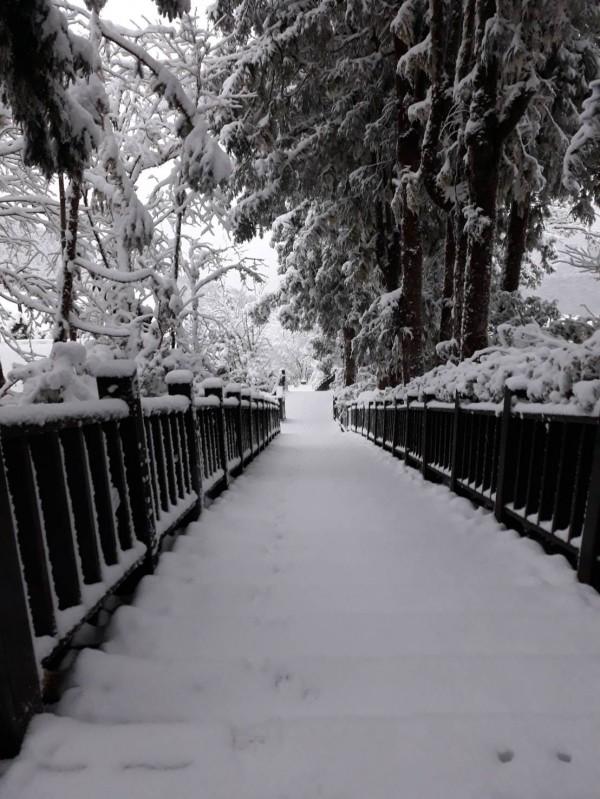 強烈寒流將太平山遊樂區凍成銀白色世界,太平山莊扁柏館周圍積雪深約7公分。(記者張議晨翻攝)