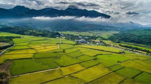 富里鄉栽種有機米已有24年歷史,位於山與平地交界,還有河流貫穿,從空中俯瞰美不勝收。(富里鄉農會提供)