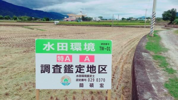 富里鄉進行水田環境生態調查,共有6公頃獲得「米.食味鑑定士協會」發出的台灣第一張「水田環境特A認定証」。(富里鄉農會提供)