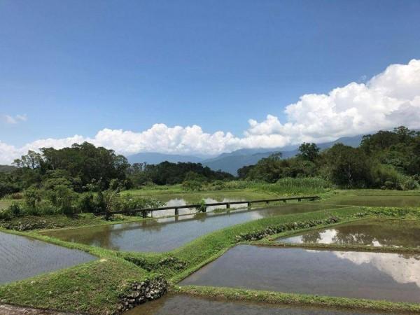 富里鄉羅山有機村水源乾淨,圖為橫跨水田上空的水利會引水橋。(富里鄉農會提供)