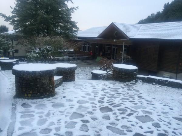 低溫持續下探,玉山塔塔加園區終於飄雪,積雪1.5公分。(圖由玉管處提供)