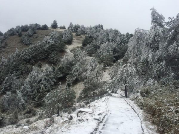 低溫持續下探,玉山塔塔加園區飄降瑞雪,步道林木都覆蓋皚皚白雪。(圖由玉管處提供)