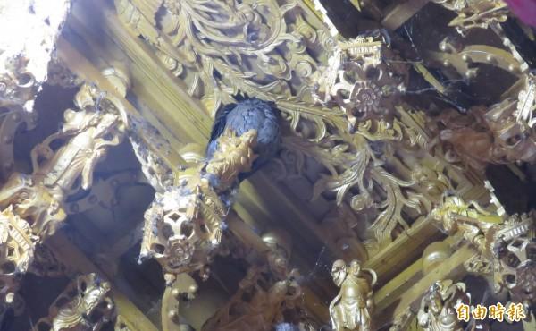 不畏寒流,竹山克明宮的「靈鳥」貓頭鷹,近期從廟內移駕廟外屋簷。(記者劉濱銓攝)