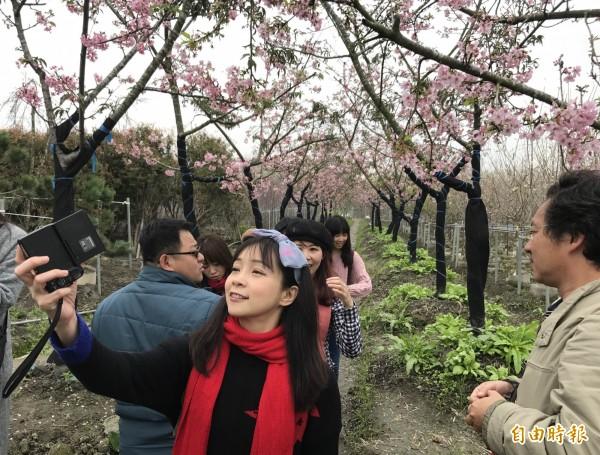 芬園鄉花卉休憩園區的河津櫻盛開,遊客紛紛拍照留念。(記者湯世名攝)