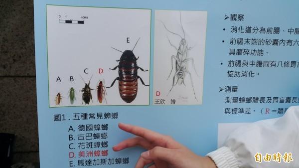 台東女中學生養蟑螂解剖做實驗,展示研究成果。(記者黃明堂攝)