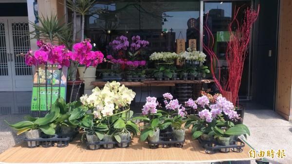 今年不少人用蘭花組合盆栽當情人節禮物。(記者廖淑玲攝)