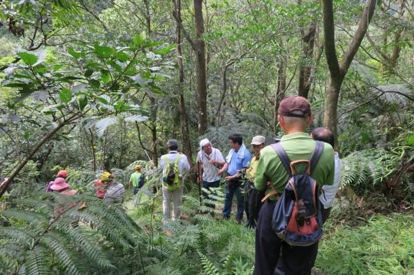 紫東古道遍布豐富的蕨類生態,適合民眾健行踏青。(新北市農業局提供)