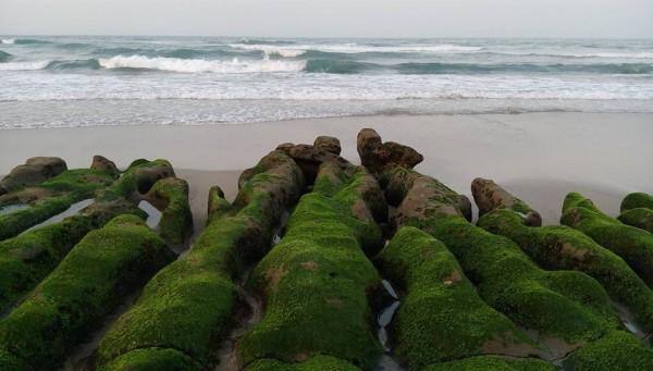 老梅綠石槽是春季限定的景致。(記者林欣漢翻攝)