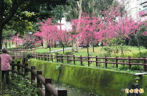 社區居民出錢出力,把髒亂的環境整理成「櫻花公園」。(記者李容萍攝)