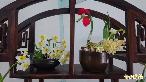 義賣的水仙花作品。(記者楊金城攝)