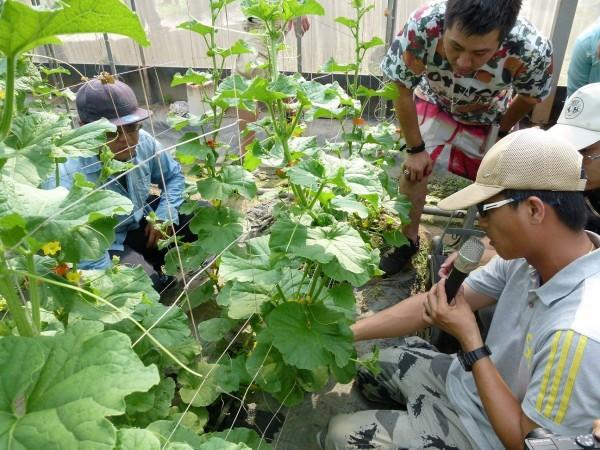 青年加農學員到農業賢拜經營的溫室參觀。(農業局提供)