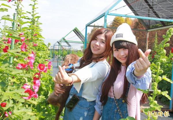 部落客Nana(左)與遊客Nanami(右)相邀來賞蜀葵花。(記者陳冠備攝)