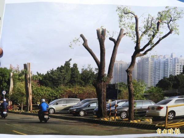 蓮池潭停車場周邊的路樹,也難逃斷頭命運。(記者葛祐豪攝)