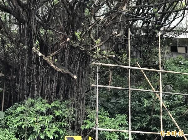 基隆市安樂區某路口有人為了架設鷹架砍樹枝。(記者盧賢秀攝)