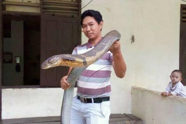 由於該名網友僅穿著短褲和靴子,沒有穿戴任何安全防護裝備,許多人認為這條眼鏡王蛇是他飼養的寵物。(圖片截取自Made Dwi Sudarmawan臉書)