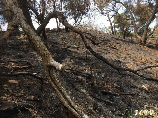清水鰲峰山清明時期常有零星火勢,樹木被燒焦。(記者張軒哲攝)
