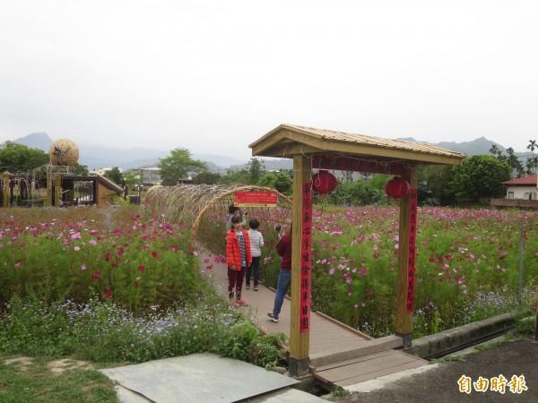 集集鎮和平社區有廣闊的波斯菊花海,清明連假吸引遊客前來賞花。(記者劉濱銓攝)