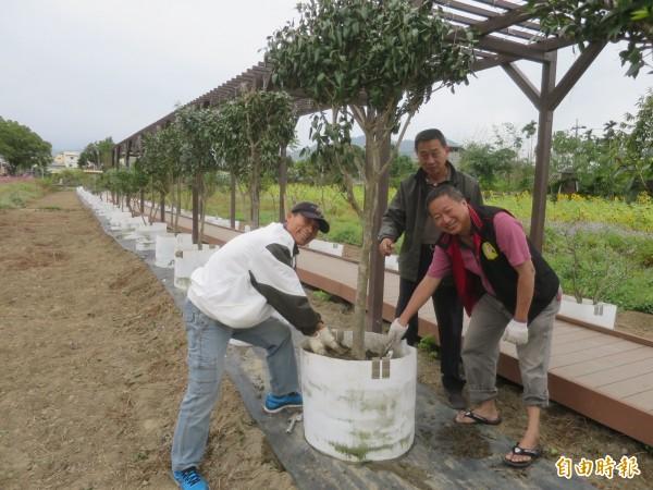 集集鎮和平社區民眾近來也在花田步道種植山茶花,未來要營造成茶花小徑。(記者劉濱銓攝)