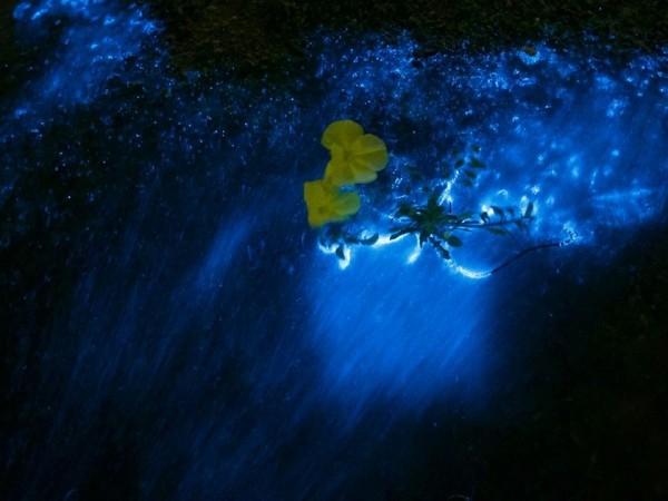 金門藍眼淚報到,只要耐心等候,都有機會看見讓人療癒的星砂和藍光。(許進西提供)