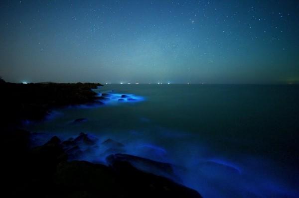 金門海邊出現「藍眼淚」,透過相機特定的快門取景,會產生夢幻般的藍光世界。(許進西提供)
