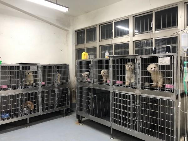 基隆市動物保護防疫所查獲陳姓婦人無照在租屋處繁殖犬隻,並在網路上販售牟利。(基隆市動物保護防疫所提供)