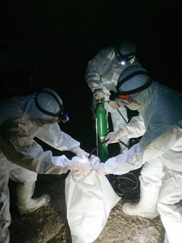 驗出禽流感病毒的歸仁土雞場撲殺土雞。(記者楊金城翻攝)