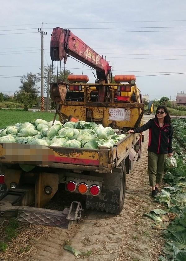 拖吊車車斗小心翼翼地堆放300顆高麗菜,準備分送給認購民眾。(記者陳冠備翻攝)