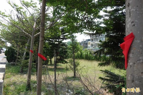 鹿港溪沿岸的樹木釘上紅布條名牌,彰化縣政府水資處表示這些都是要「保留」的樹木。(記者劉曉欣攝)