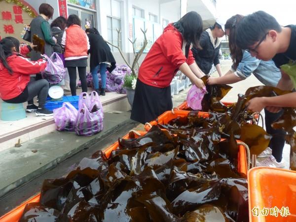 金門水試所海帶大豐收,以3斤100元回饋鄉親。(記者吳正庭攝)