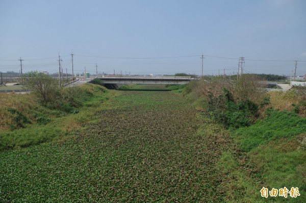 沿海地區部分河川全被布袋蓮覆蓋,成為「綠川。(記者林國賢攝)