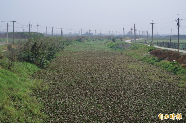 布袋蓮覆蓋河面,影響排水,縣府近日展開清除作業。(記者林國賢攝)