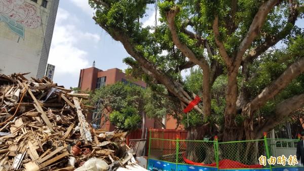 百年老樹旁邊的房舍已拆除。(記者楊心慧攝)