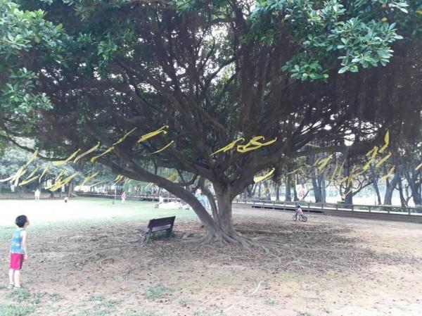 中大師生管理學院前的「太極中大樹」繫黃絲帶,為「 中大挺校園民主、大學自治宣言」發聲。(中央大學財金系主任葉錦徽提供)