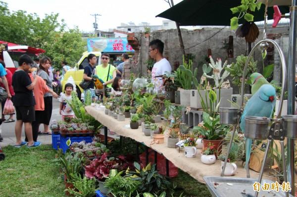 一樣是搶攻多肉植物愛好者的心房,但是在竹東文創藝術村內這攤添加了美麗又優雅的鸚鵡,果然成功吸引來客的目光。(記者黃美珠攝)
