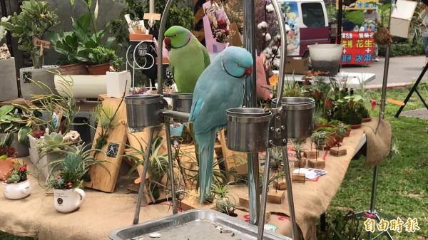 竹東文創藝術村內的攤商多元,且各有故事和看頭,如圖的「花鳥圖」,讓多肉植物顯得很不一樣。(記者黃美珠攝)