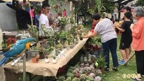 竹東文創藝術村內的攤商多元,且各有故事和看頭。如圖的「花鳥圖」,讓多肉植物顯得很不一樣,來客踴躍停下腳步欣賞。(記者黃美珠攝)