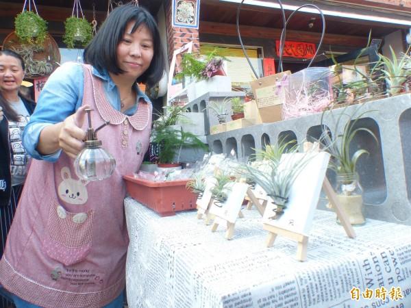 金門後浦十六藝文特區「希望市集」推出空氣鳳梨,為活動點綴不少綠意。(記者吳正庭攝)