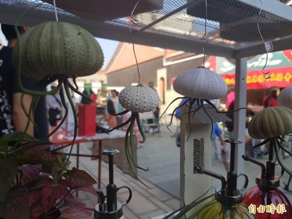 像章魚般的海膽殼加空氣鳳梨,在希望市集詢問度頗高。(記者吳正庭攝)
