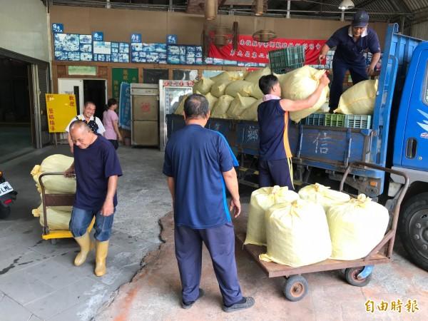 信義鄉農會將近百噸青梅運抵中寮,並一包包卸貨。(記者陳鳳麗攝)