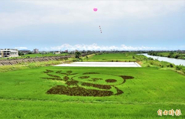 宜蘭縣壯圍鄉公所在水稻田裡,用黑、綠兩色稻米在田裡創作成熊貓圖樣,可愛又吸睛。(記者張議晨攝)