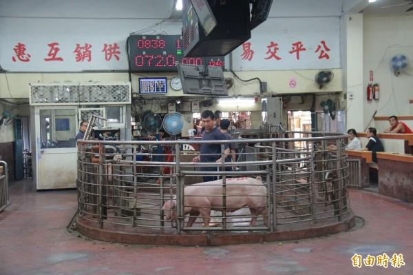 豬肉市場價格回穩,彰化肉品市場拍賣價格連續4日來到每公斤70元以上。(記者陳冠備攝)