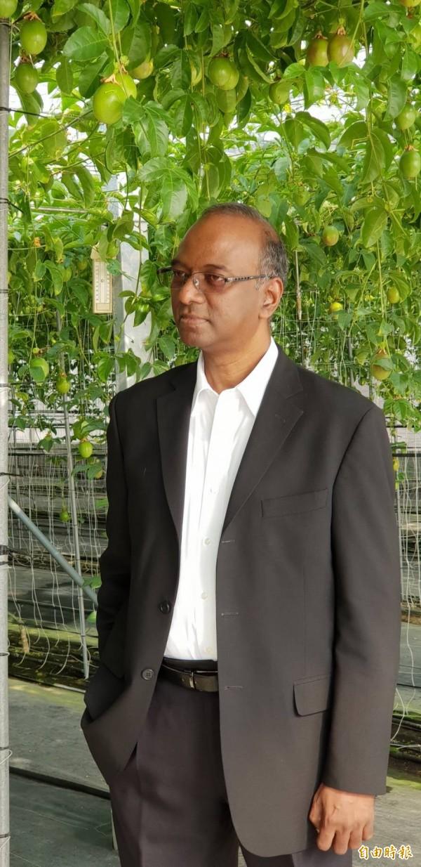 印度駐台代表史達仁參訪農委會農業試驗所以溫室栽種的台農一號百香果,溫室裡長出許多綠色尚未成熟的百香果。(記者李欣芳攝)
